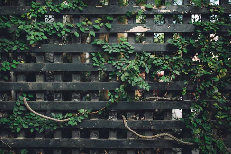 Fence panels for windy gardens: protection from wind and onlookers