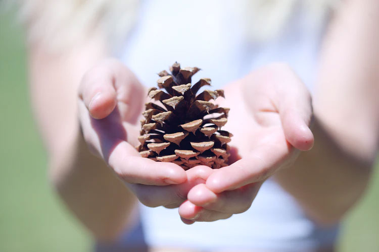 How To Wash And Clean Pine Cones