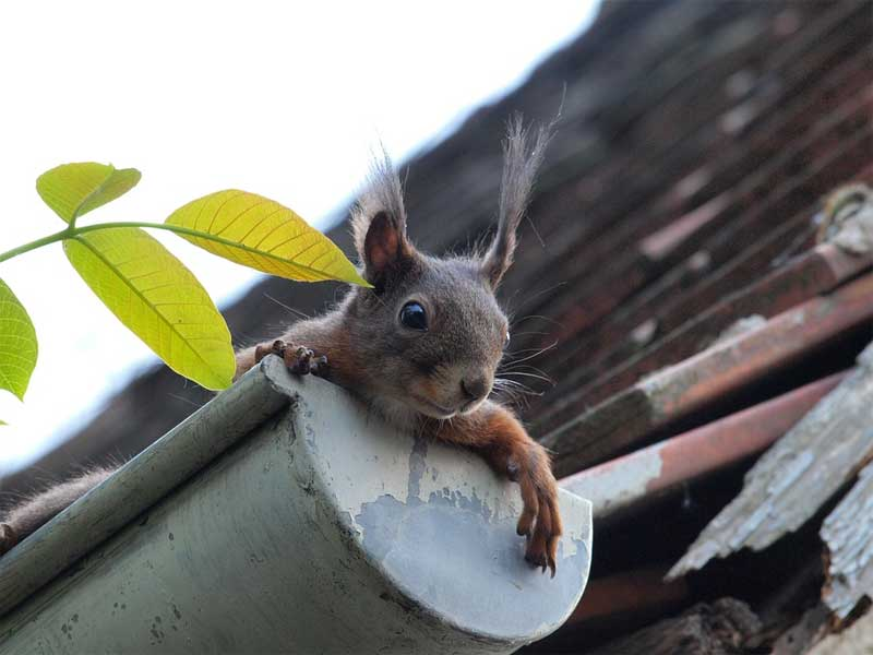 Maintenance and Cleaning of Gutters and Downspouts